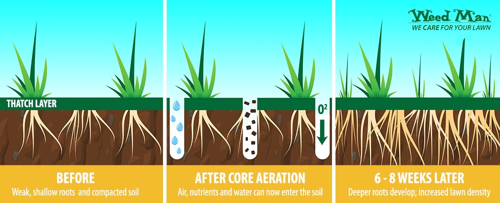 how core aeration works